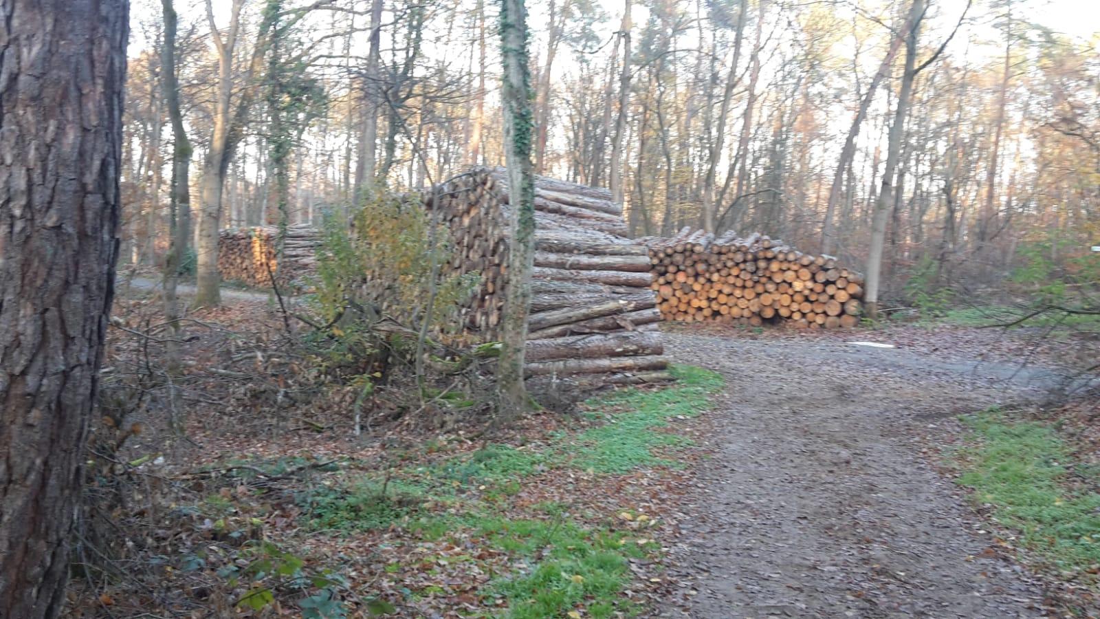 Einstmals dichter Wald verwandelt sich in Holzstapel am Wegesrand